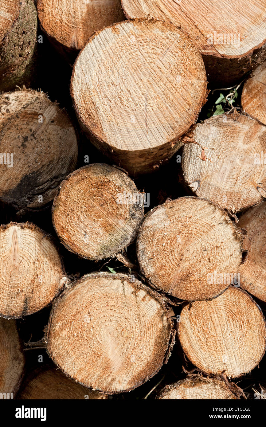Stack of cut tree trunks end on view - Stock Image