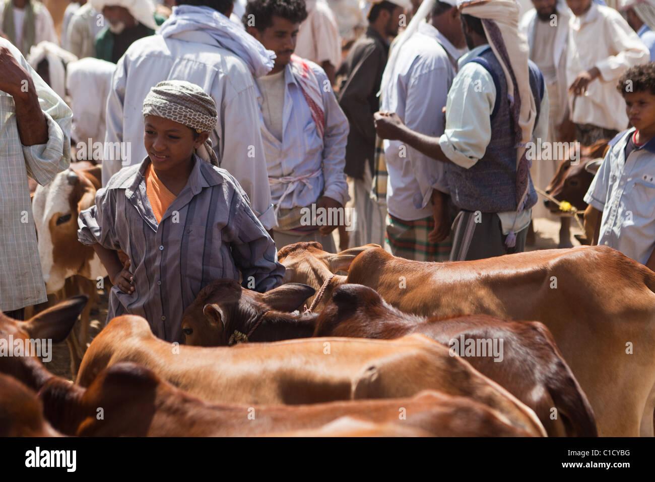 Cattle Market at Bait Al Faqih Friday Market, Yemen - Stock Image