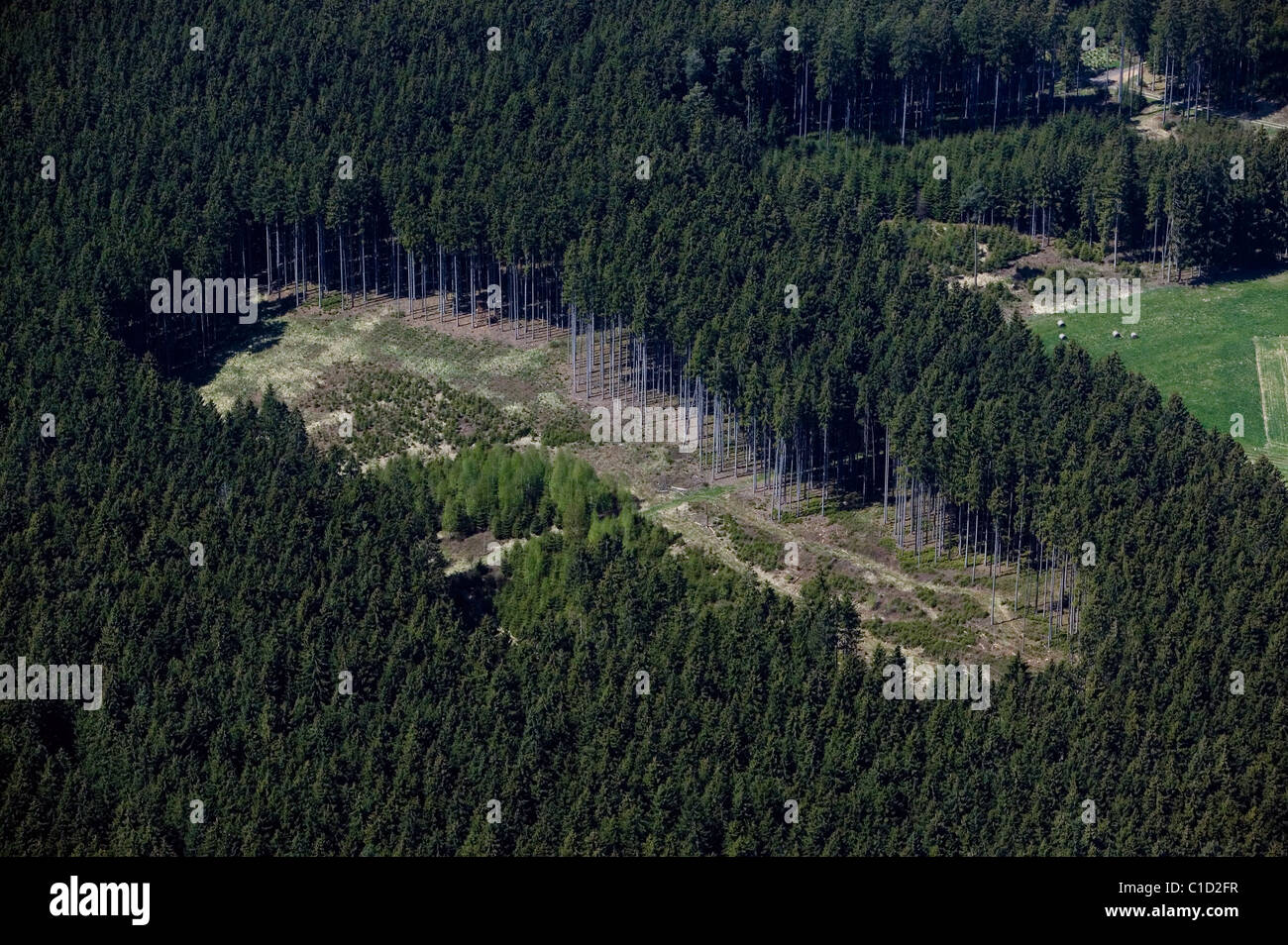 aerial view above stand of evergreen trees Bavaria Germany - Stock Image