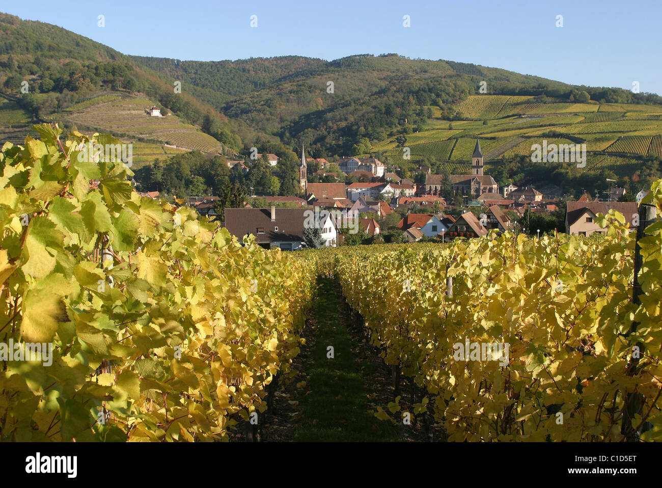 France, Haut Rhin, village of Ribeauville in the midst of the vineyard Stock Photo
