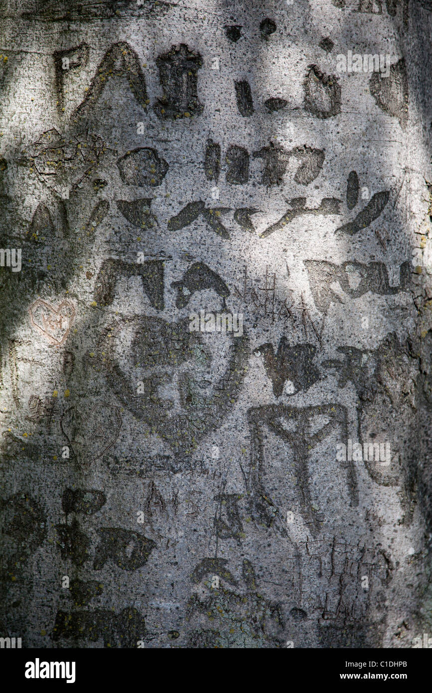 Engravings on trunk of a tree. - Stock Image