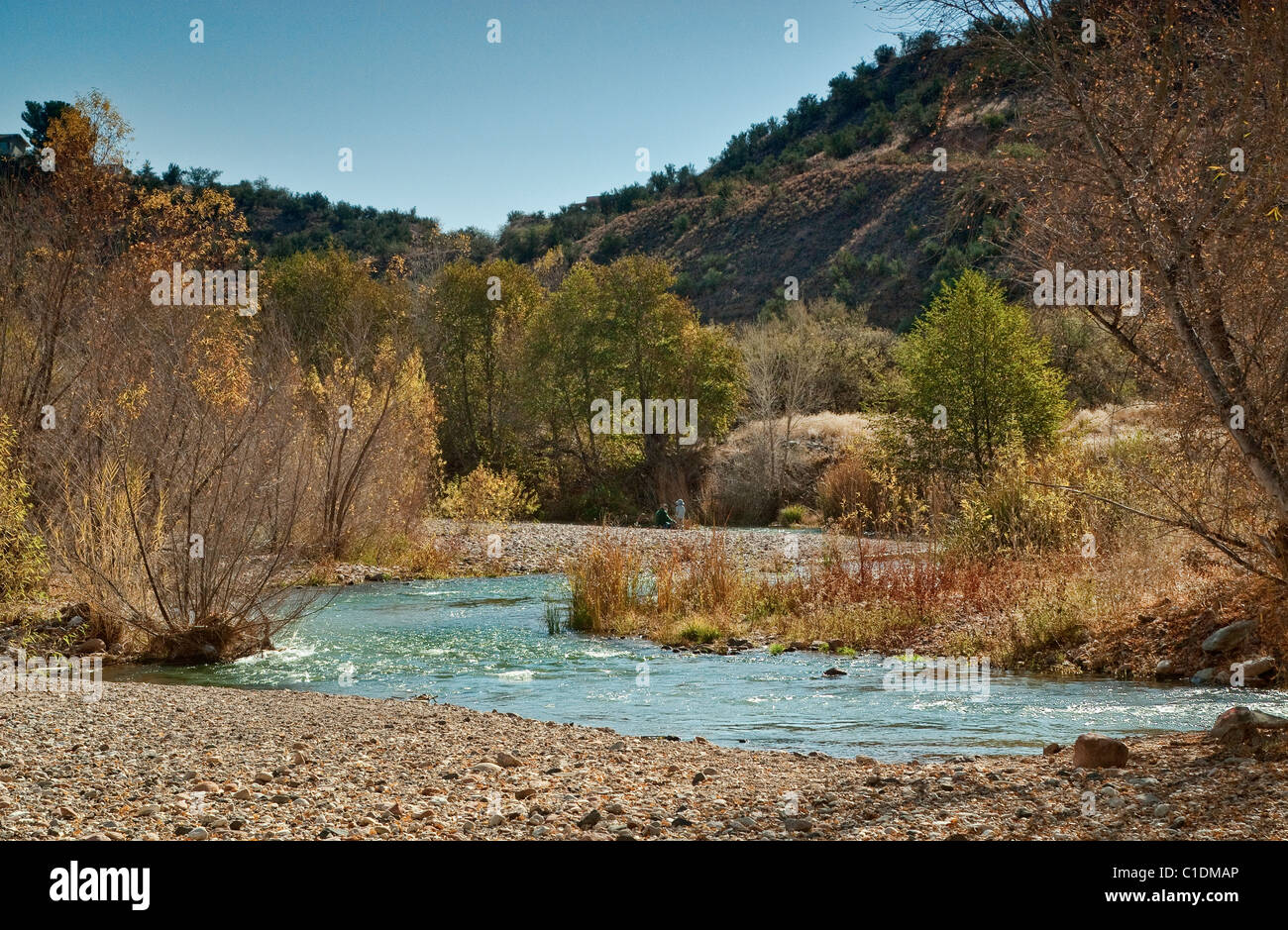 Cottonwoods and willows at Verde River Greenway near town of Cottonwood, Arizona, USA - Stock Image