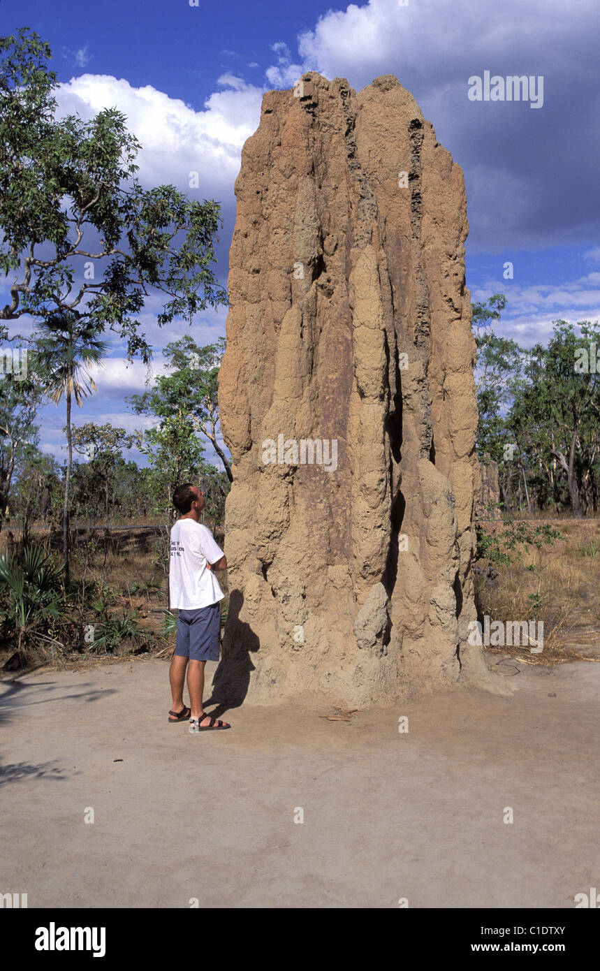 Australia, Northern Territory, Litchfield National Park, a giant anthill - Stock Image