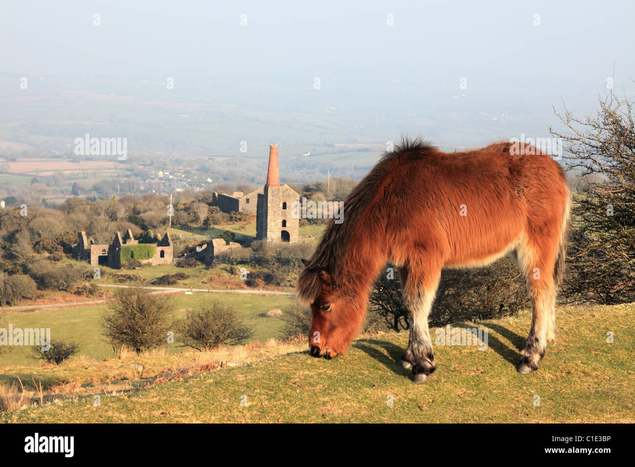 A Pony near Minions on Bodmin Moor with Phoenix United mine in the background Stock Photo