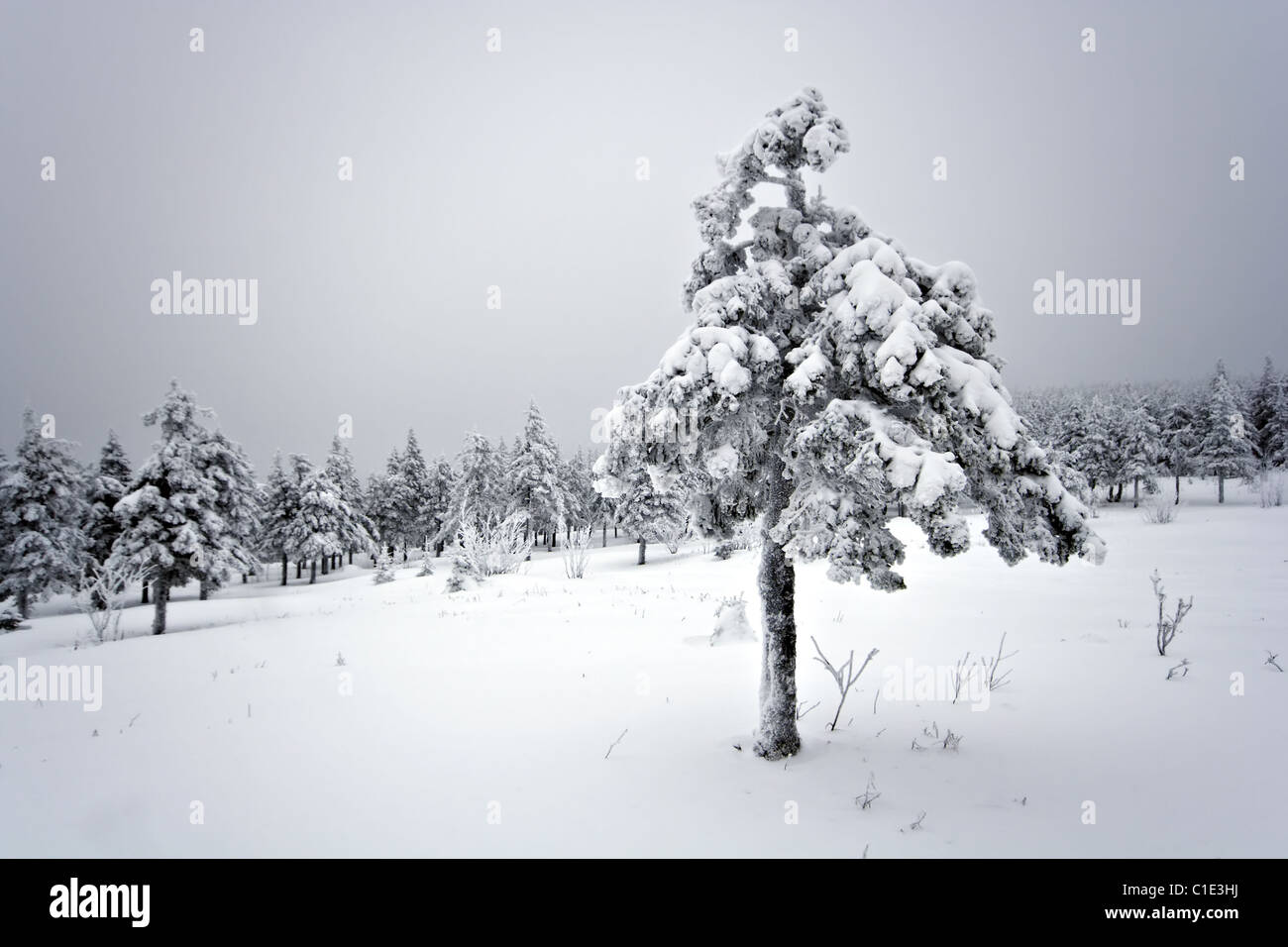 Winter forest in taiga. South Ural mountains. National park Taganay. Russia. - Stock Image