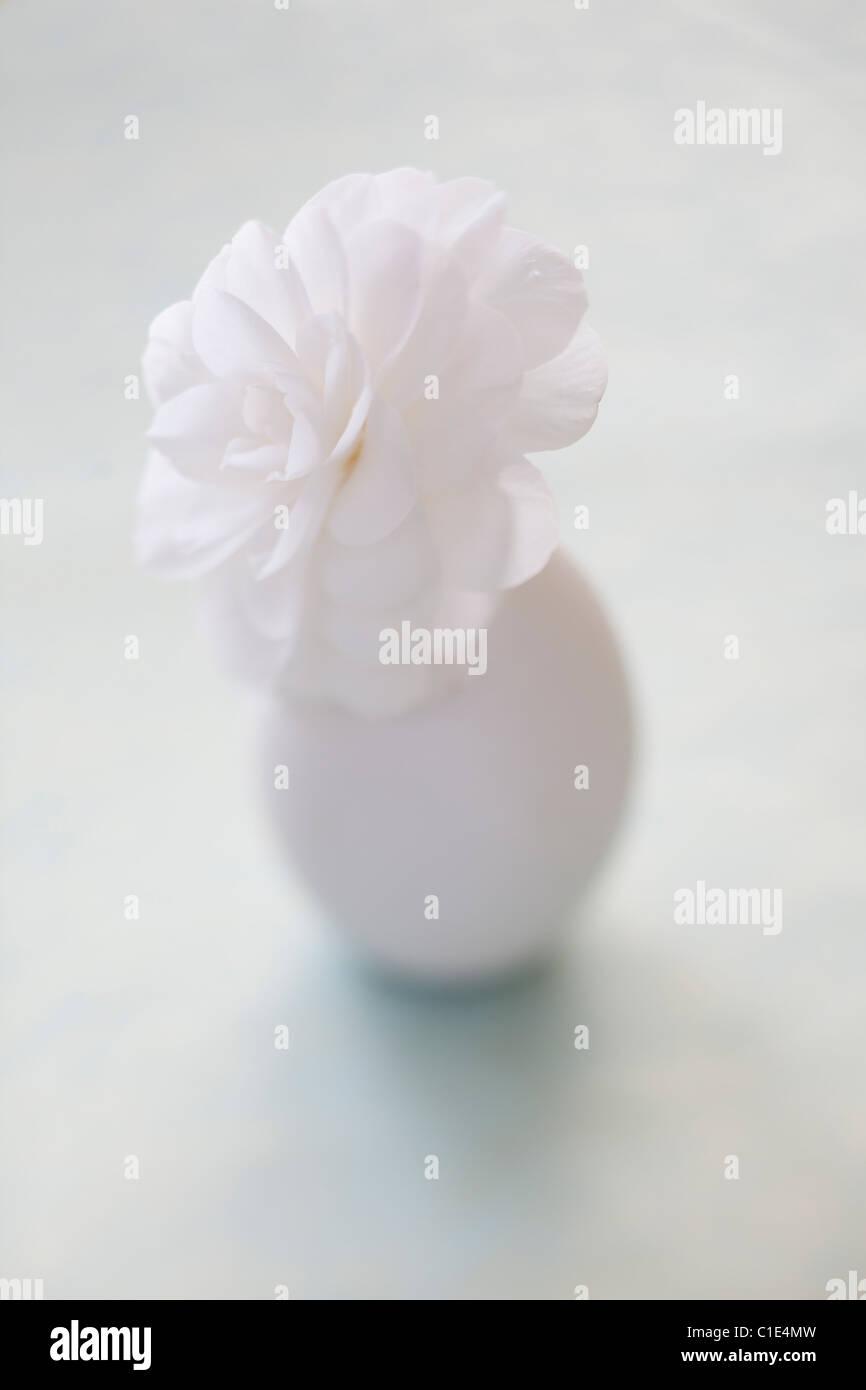 white flower in vase - Stock Image
