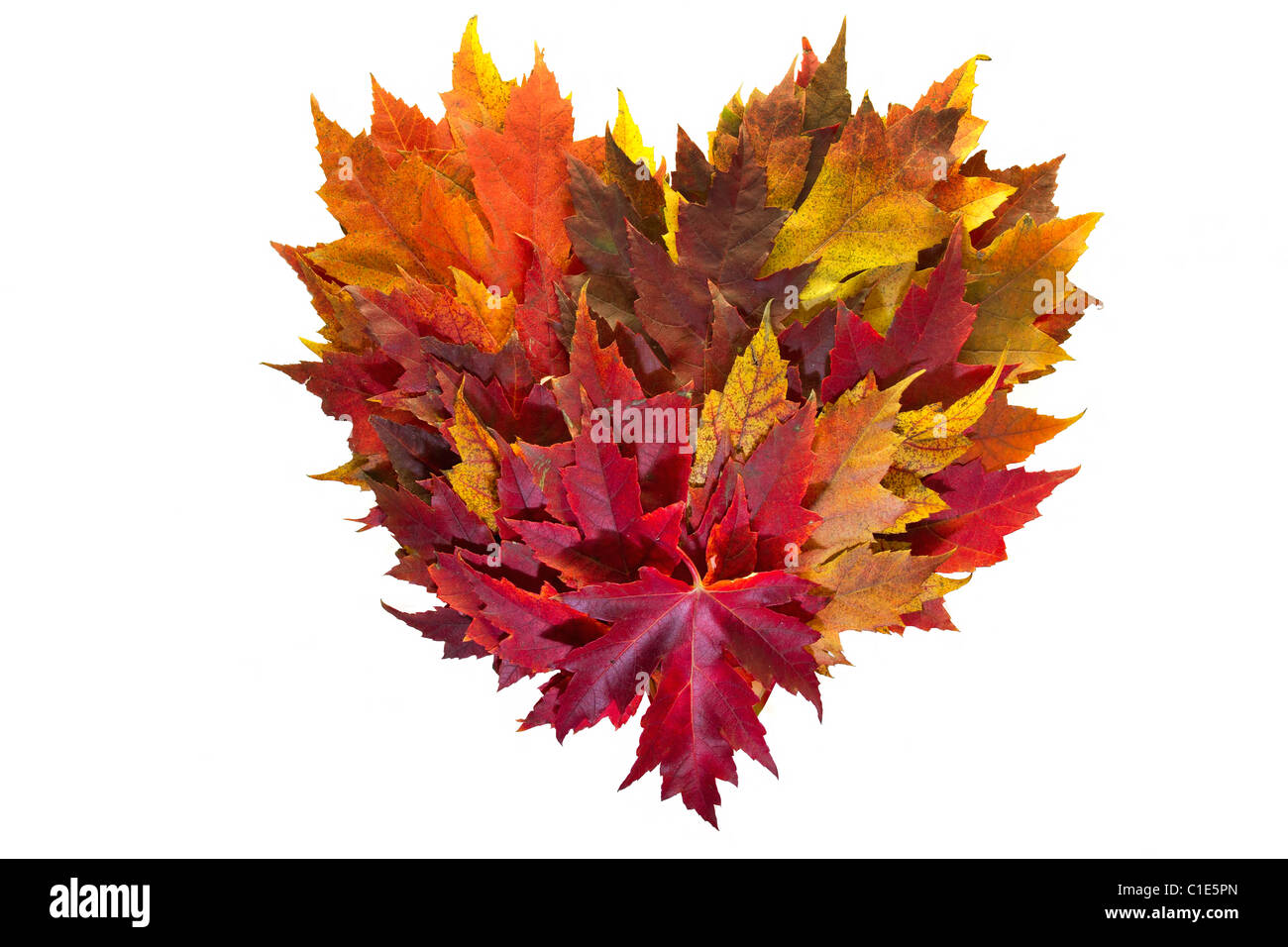 Maple Leaves Mixed Fall Colors Autumn Heart Wreath on White Background - Stock Image