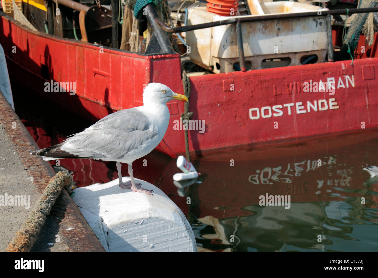 A seagull perched on a marine bollard beside a fishing bost in Ostend harbour, Belgium. Aug 2010 - Stock Image