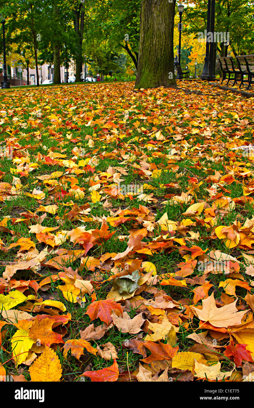 Maple And Elm Trees Fall Leaves On Lawn Grass In The Park Stock Photo Alamy