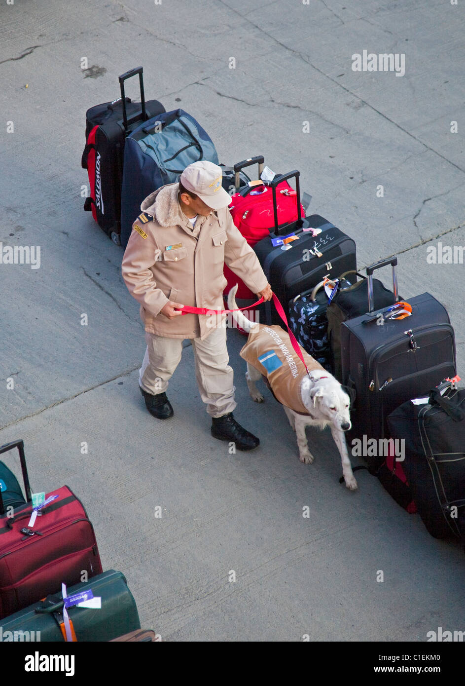 Argentine Customs Officer and Dog checking cruise ship luggage for illegal substances, Ushuaia, Argentina - Stock Image