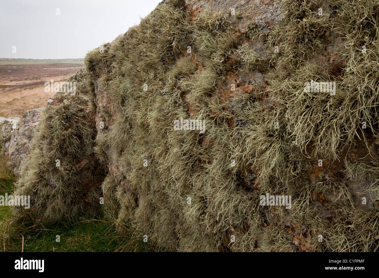 Ancient lichen-covered granite stone 'fence' near Land's End, West Penwith, Cornwall. - Stock Image