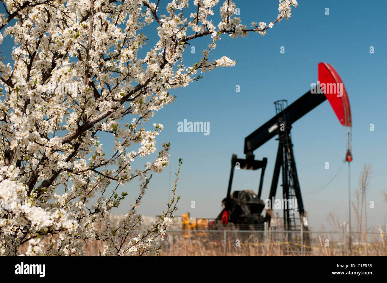 Oil well and fruit tree blossoms in San Joaquin Valley near Bakersfield California USA Stock Photo