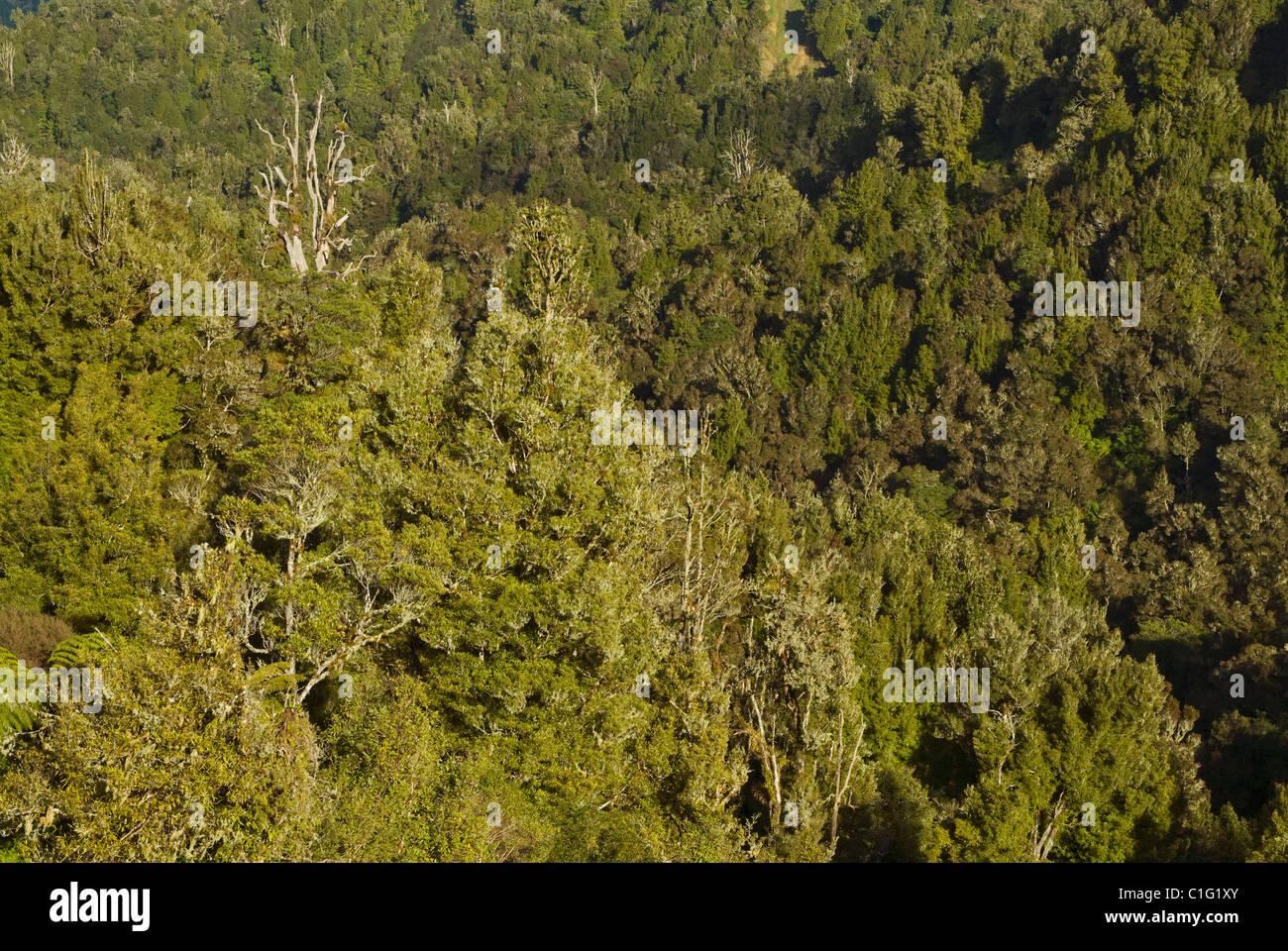 Brown kiwi (Apteryx mantelli) North Island, New Zealand - Stock Image
