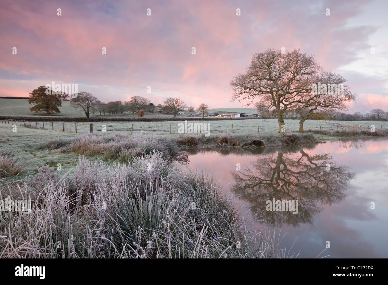 Frosty conditions at dawn beside a pond in the countryside, Morchard Road, Devon, England. Winter (November) 2010. - Stock Image