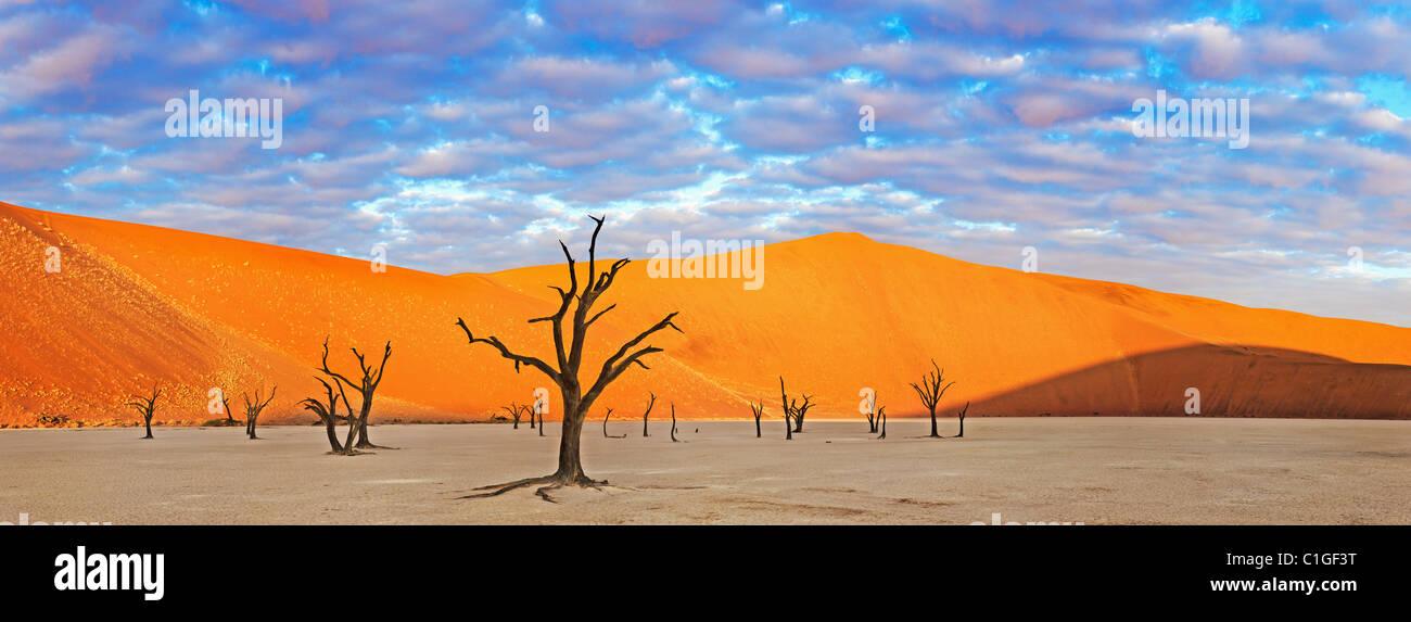 Panoramic view of a Dead Acacia tree Sossusvlei in the Namib desert. Namib-Naukluft N.P, Namibia - Stock Image
