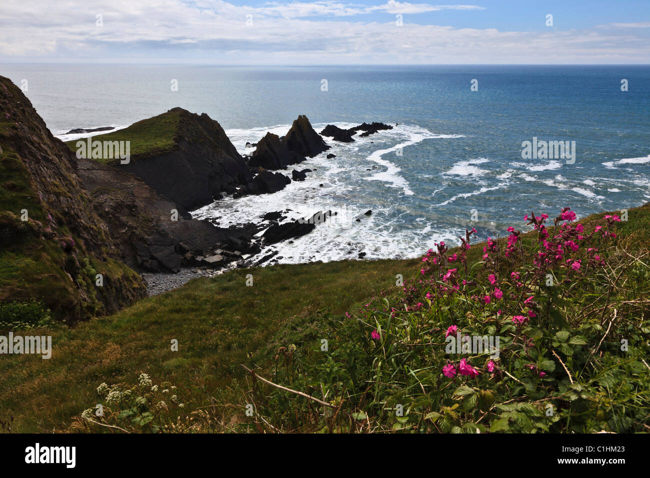 View from the South West Coast Path of the wild, rocky coast at Hartland Quay, Devon, England Stock Photo
