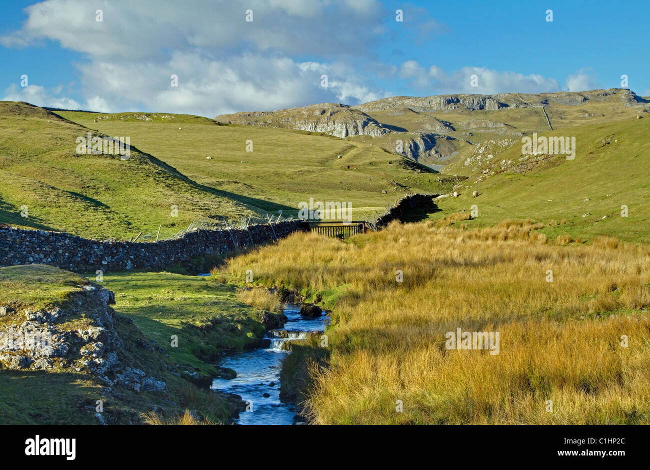 Upstream to Settle Scar - Stock Image