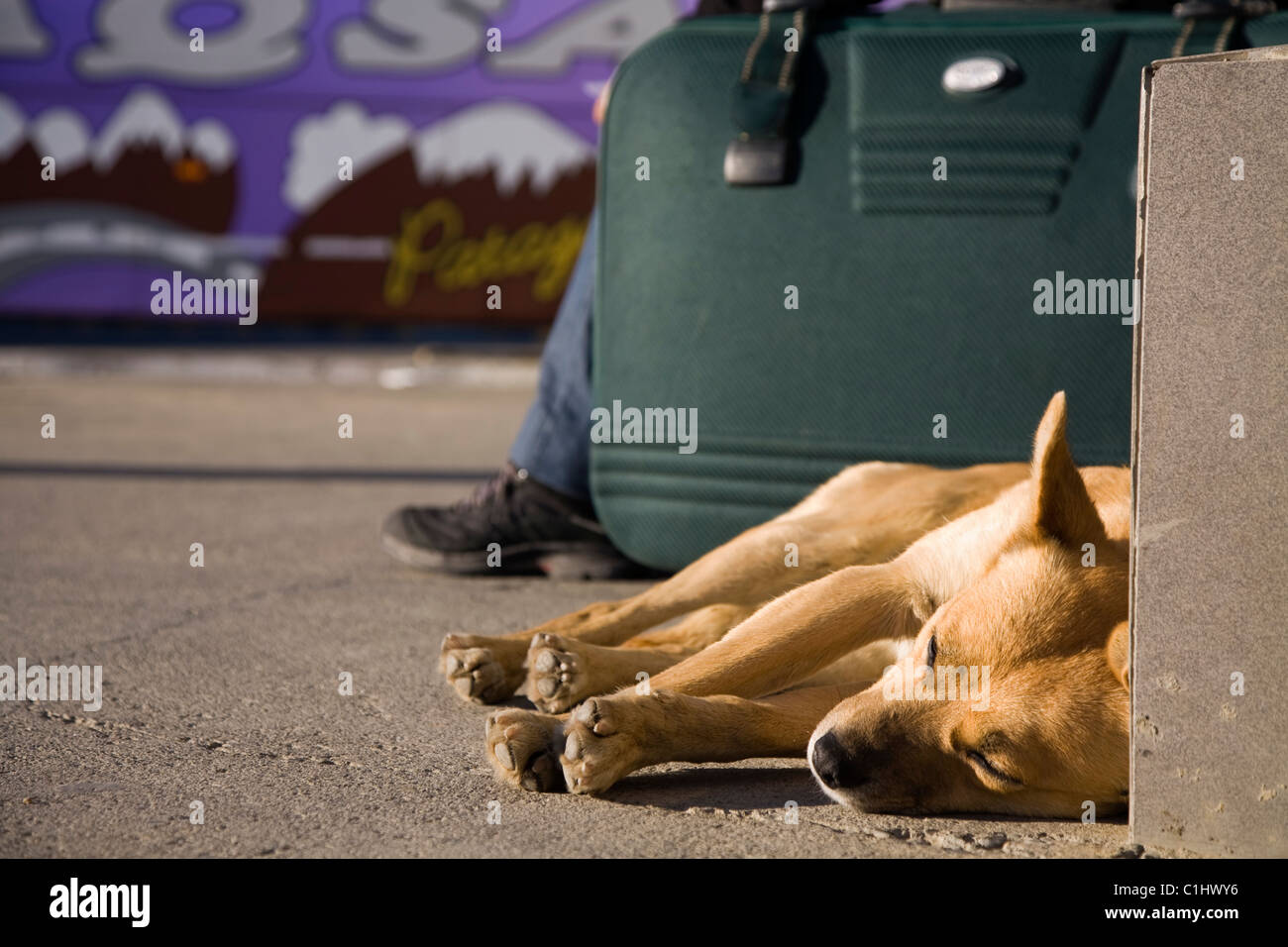 tired dog on a bus station - Stock Image