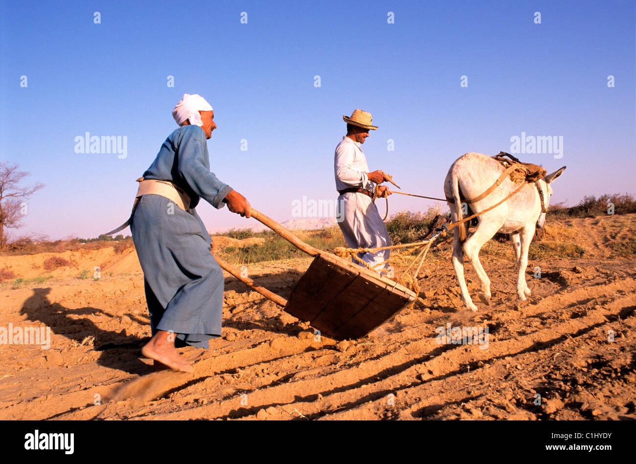 Egypt, libyc desert, handiwork in the oasis of Dakhla - Stock Image