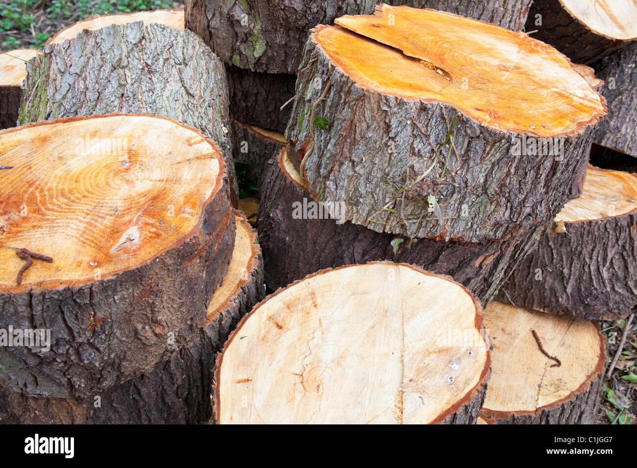Woodland management, log pile left as part of conservation policy, Kent, UK Stock Photo