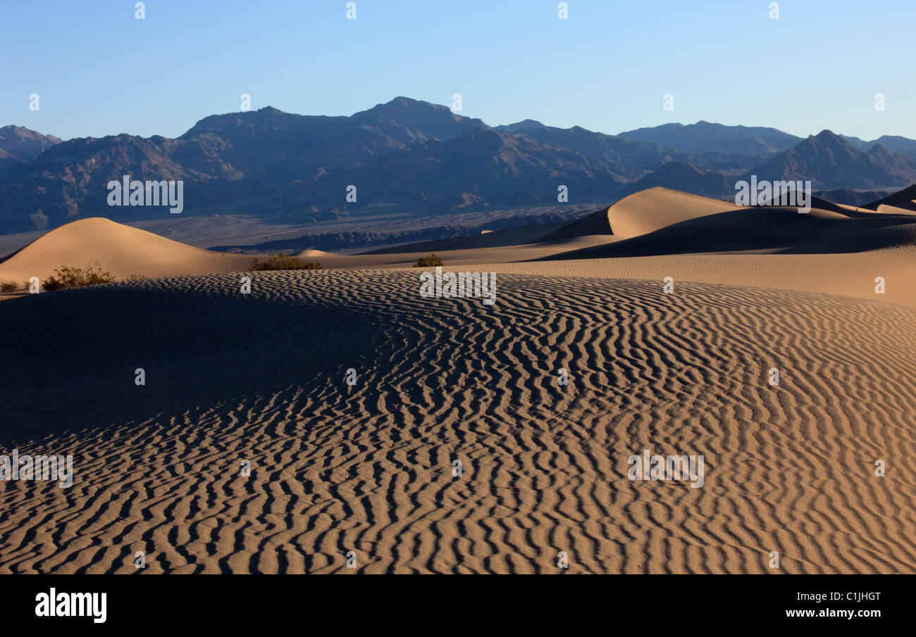 USA, California, Death Valley, National Park, Mesquite Flat, sand dunes, - Stock Image