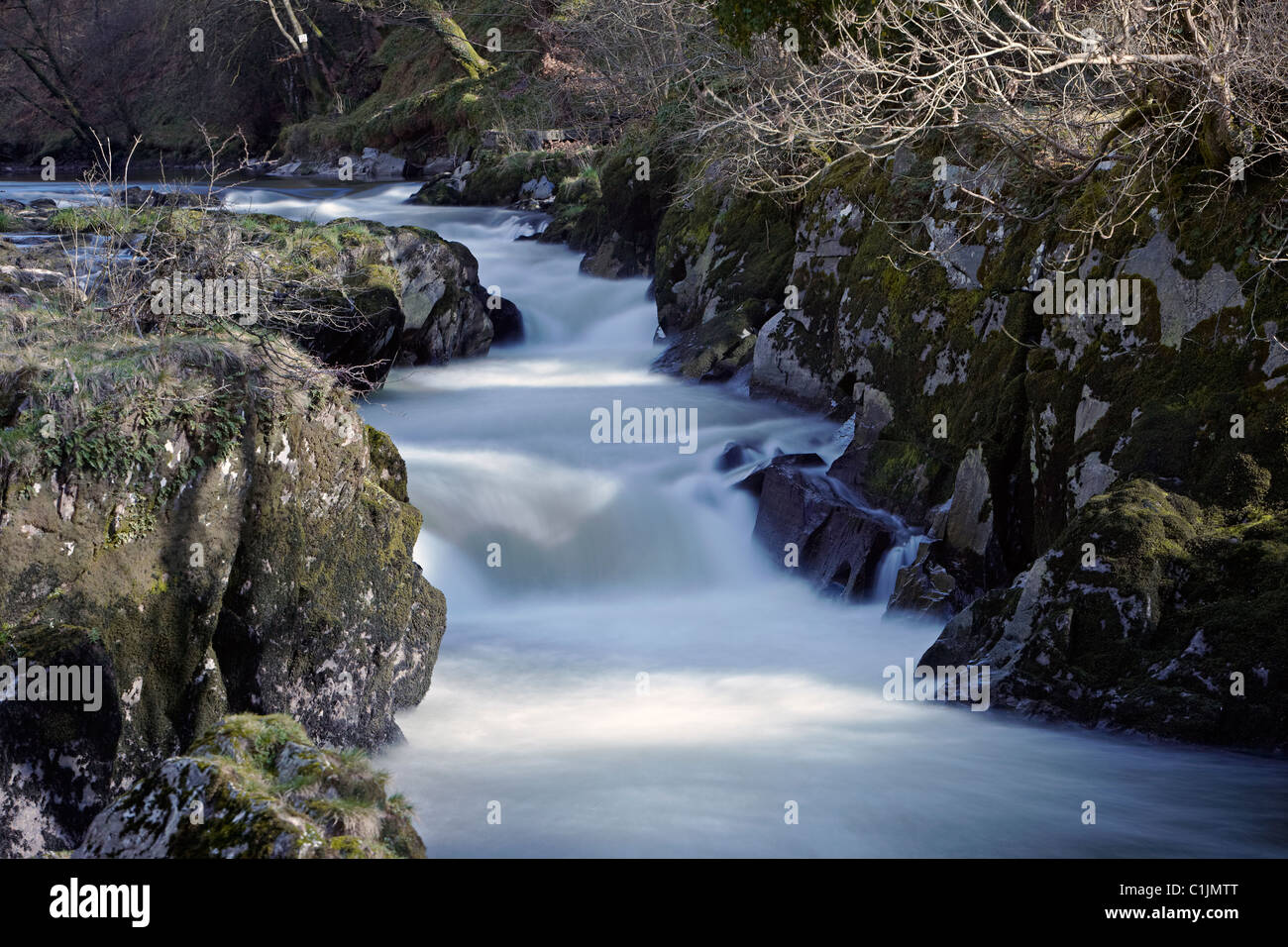 Cenarth Falls, the river Teifi, Cenarth, Cardiganshire, Wales, UK - Stock Image