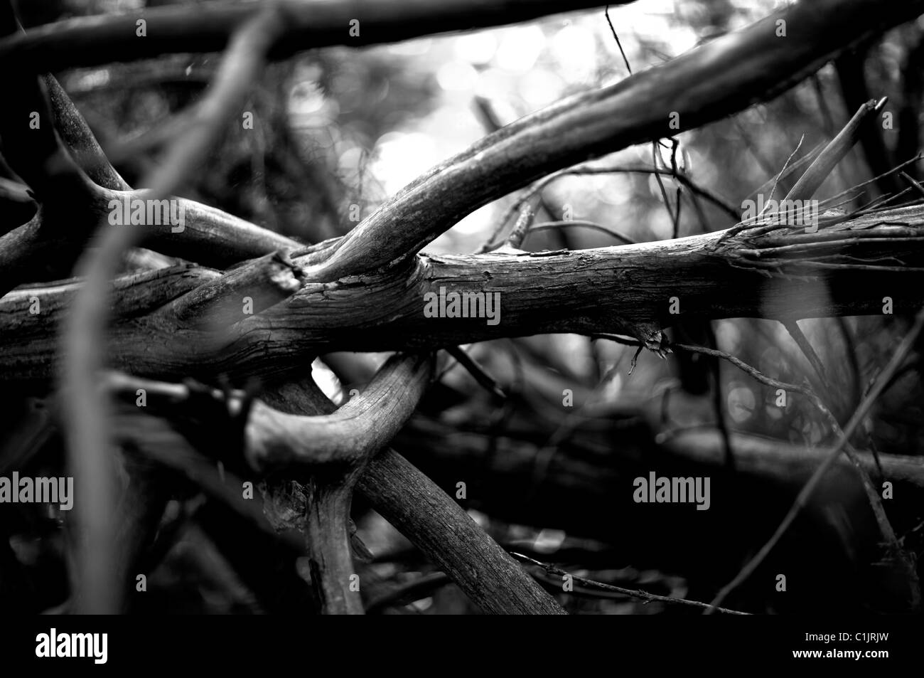 twisted branches monochrome - Stock Image