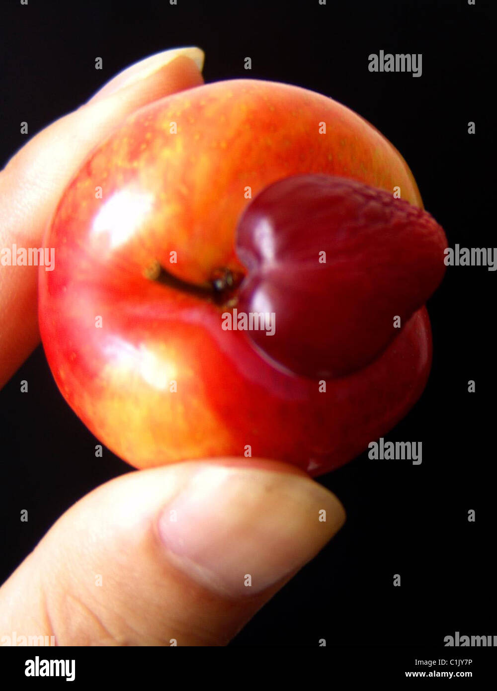 Love Plum This Freakish Fruit Is Now A Symbol Of Love In Huangshan