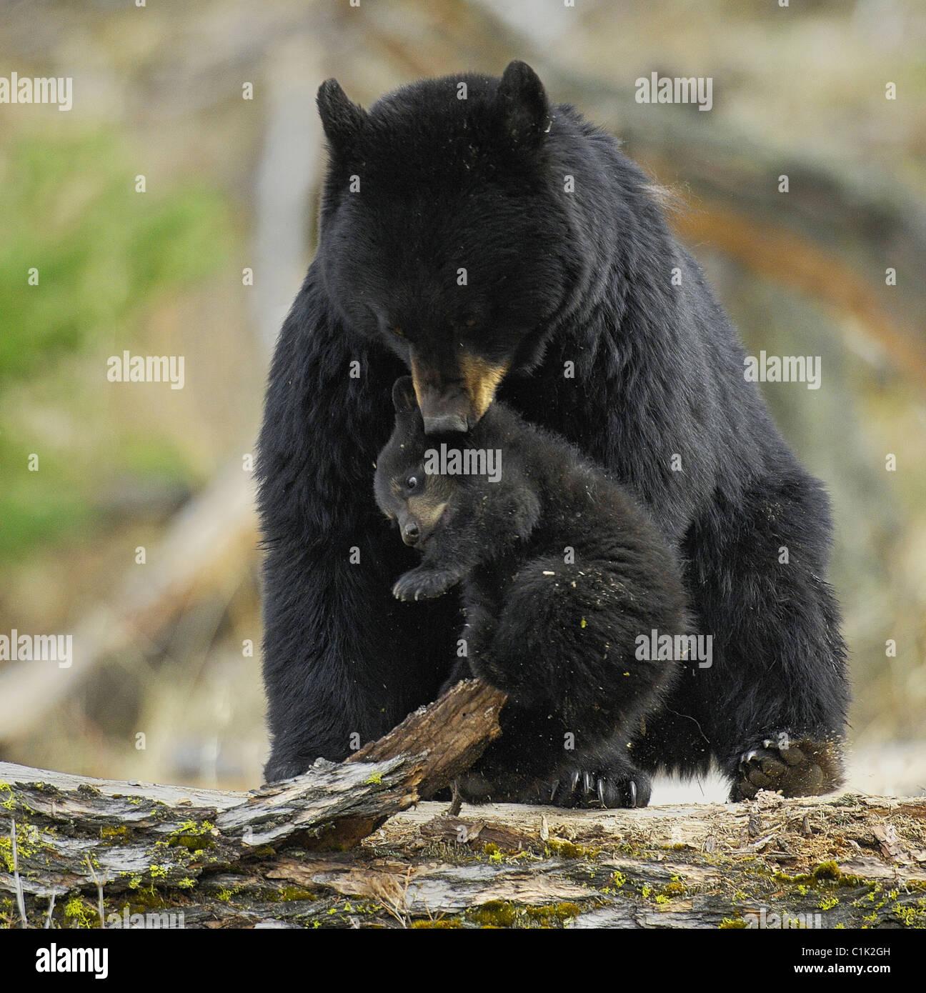 Boy Bear Cub Stock Photos & Boy Bear Cub Stock Images