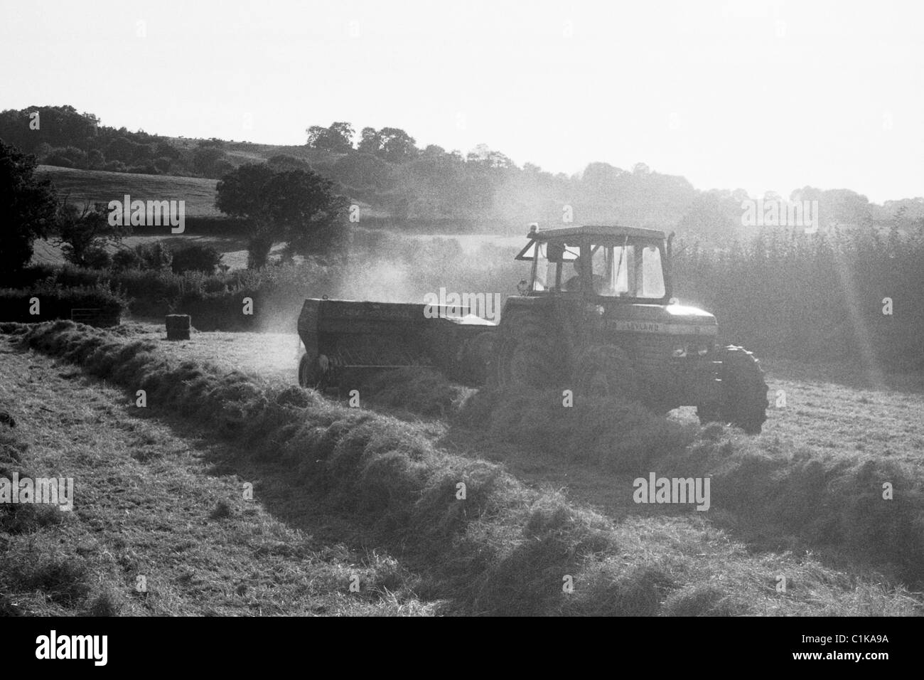 Traditional (Small Bale) haymaking at Ubley Farm in Somerset - Stock Image