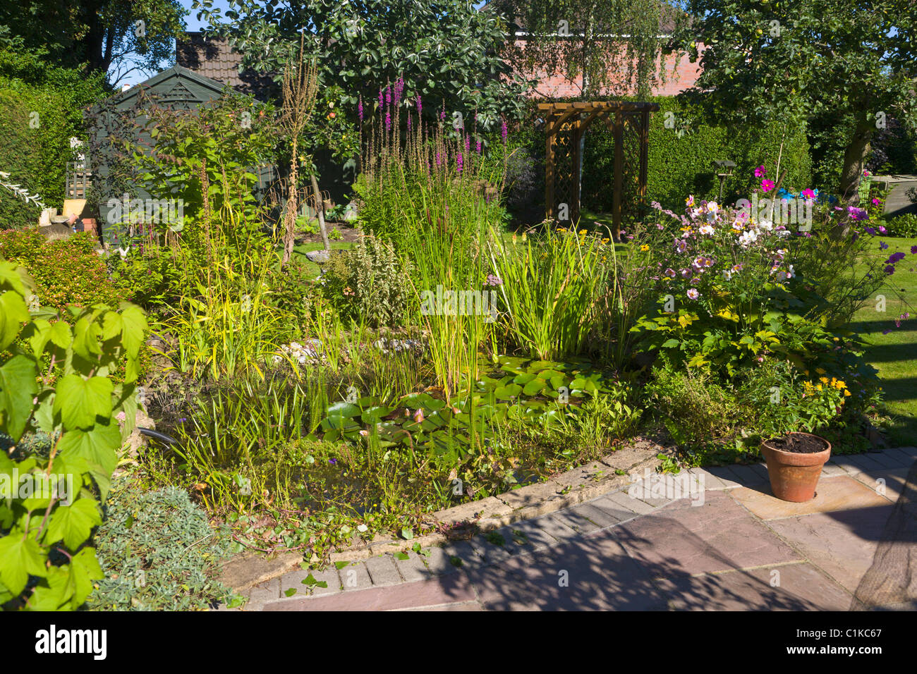 Garden pond and herbaceous border in summer - Stock Image
