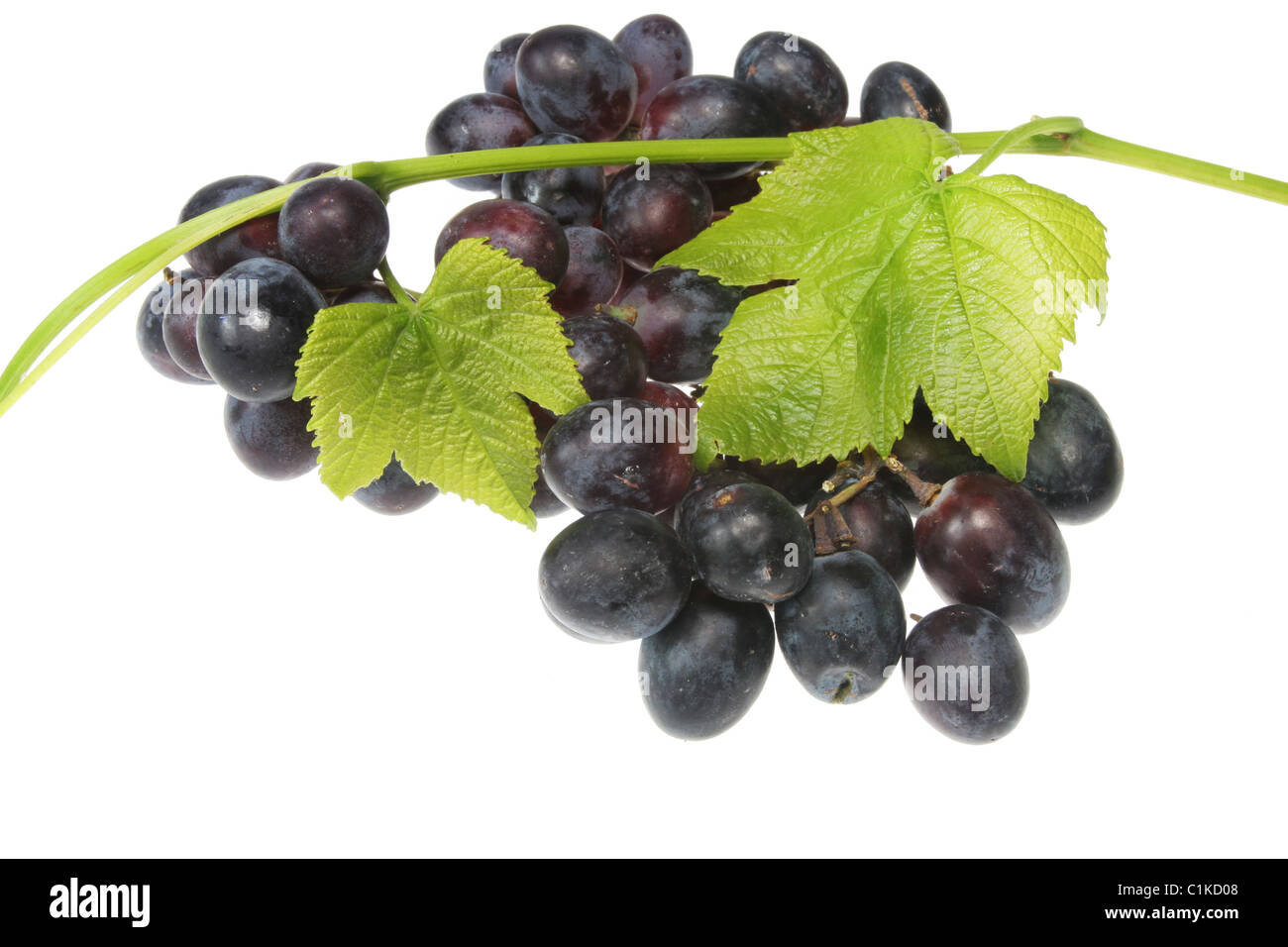 Black grapes and vine isolated on white Stock Photo