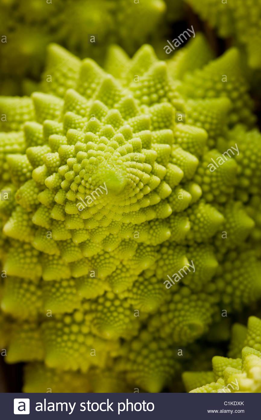 mini Cauliflower Romanesco unusual spiral fractal geometry winter spring vegetable crop home grown organic lime - Stock Image