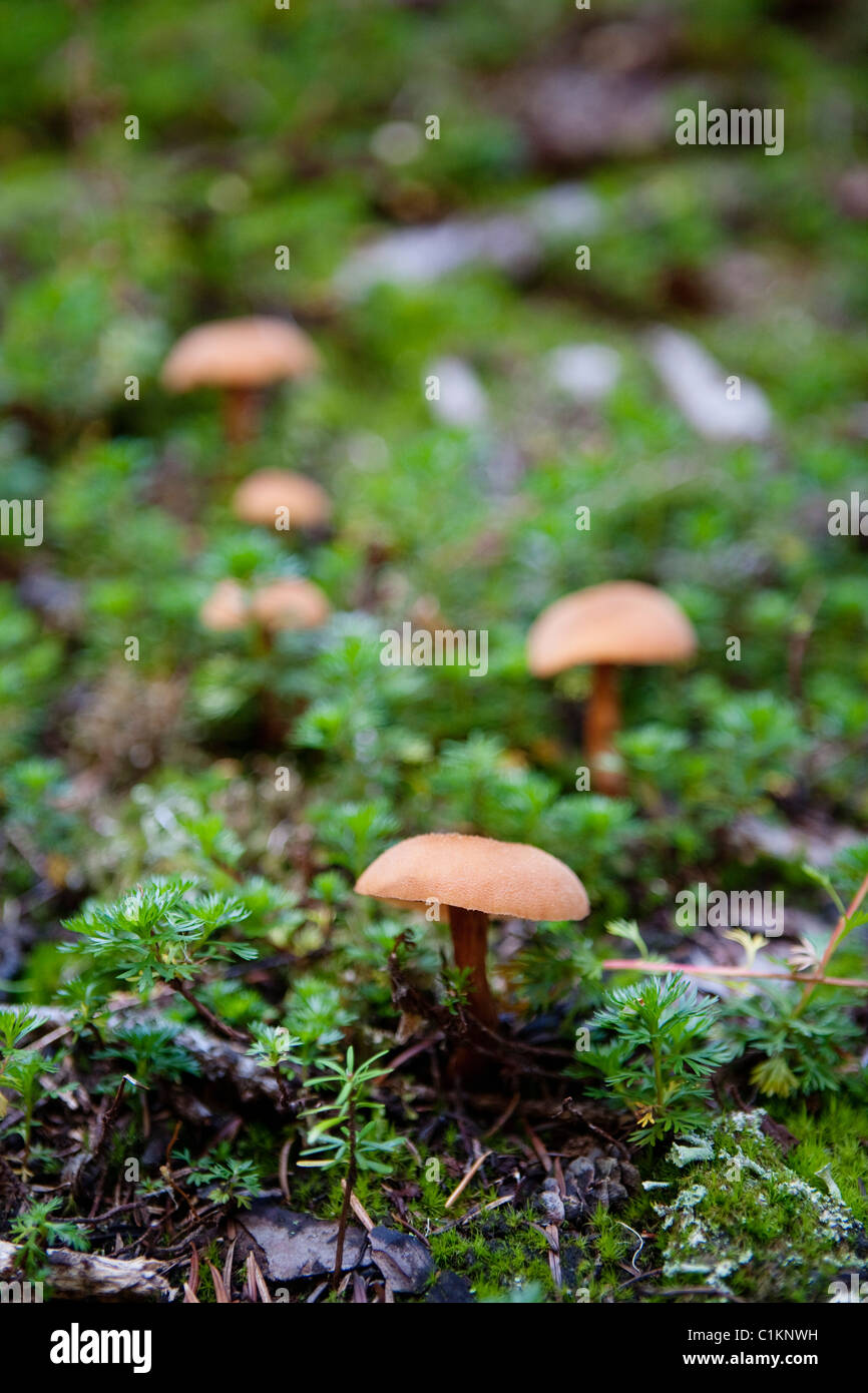 Mushrooms in Garibaldi Provincial Park, British Columbia, Canada Stock Photo