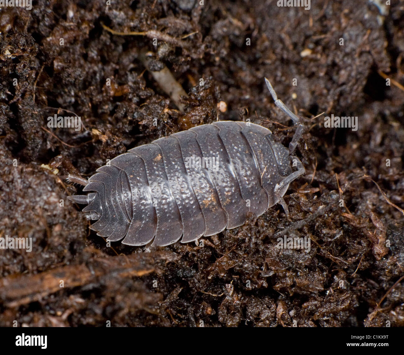 Watch How to Look After a Pet Woodlouse video