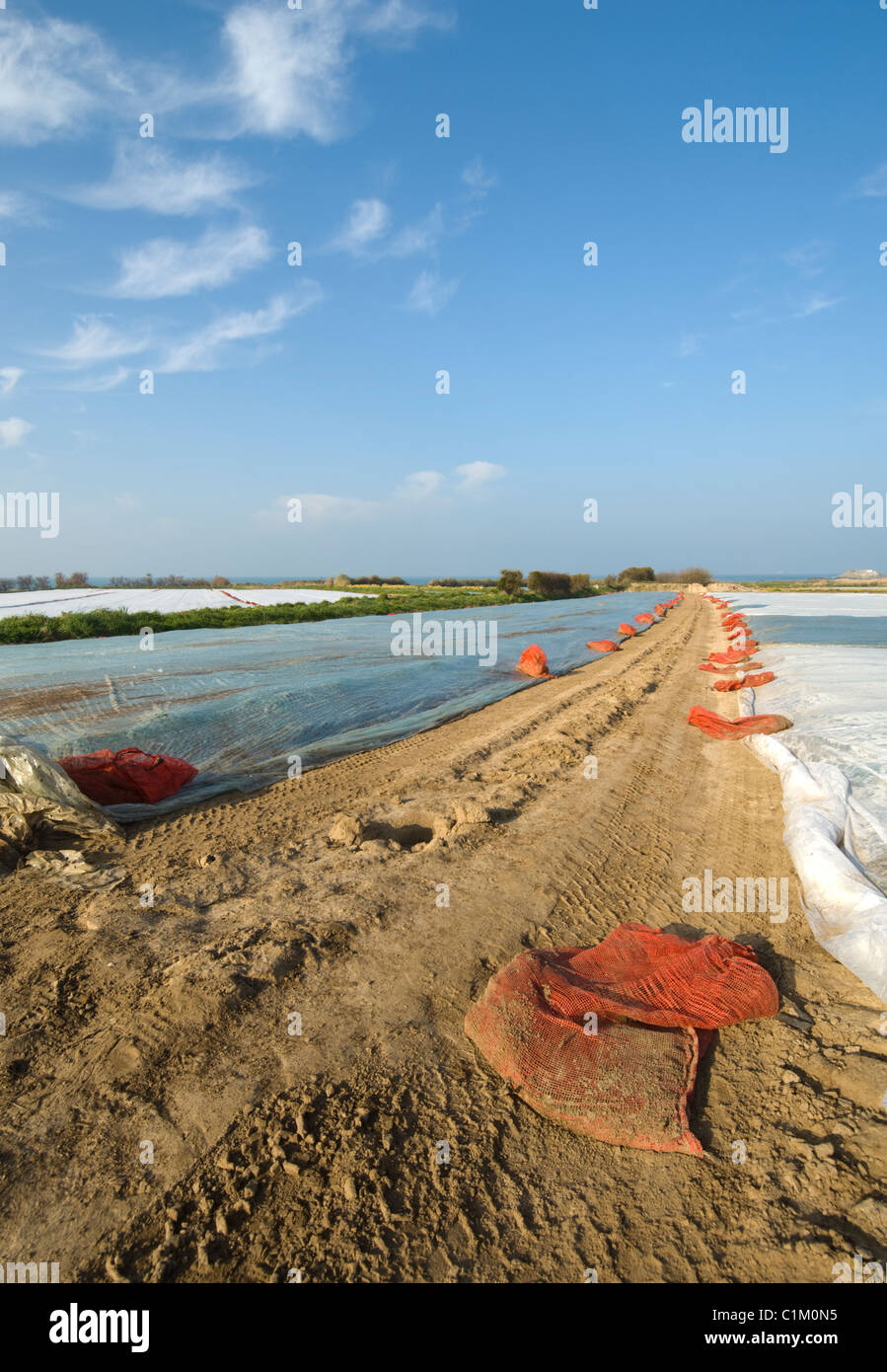 Polythene Sheeting used for early crop Les Landes Jersey Channel Islands - Stock Image