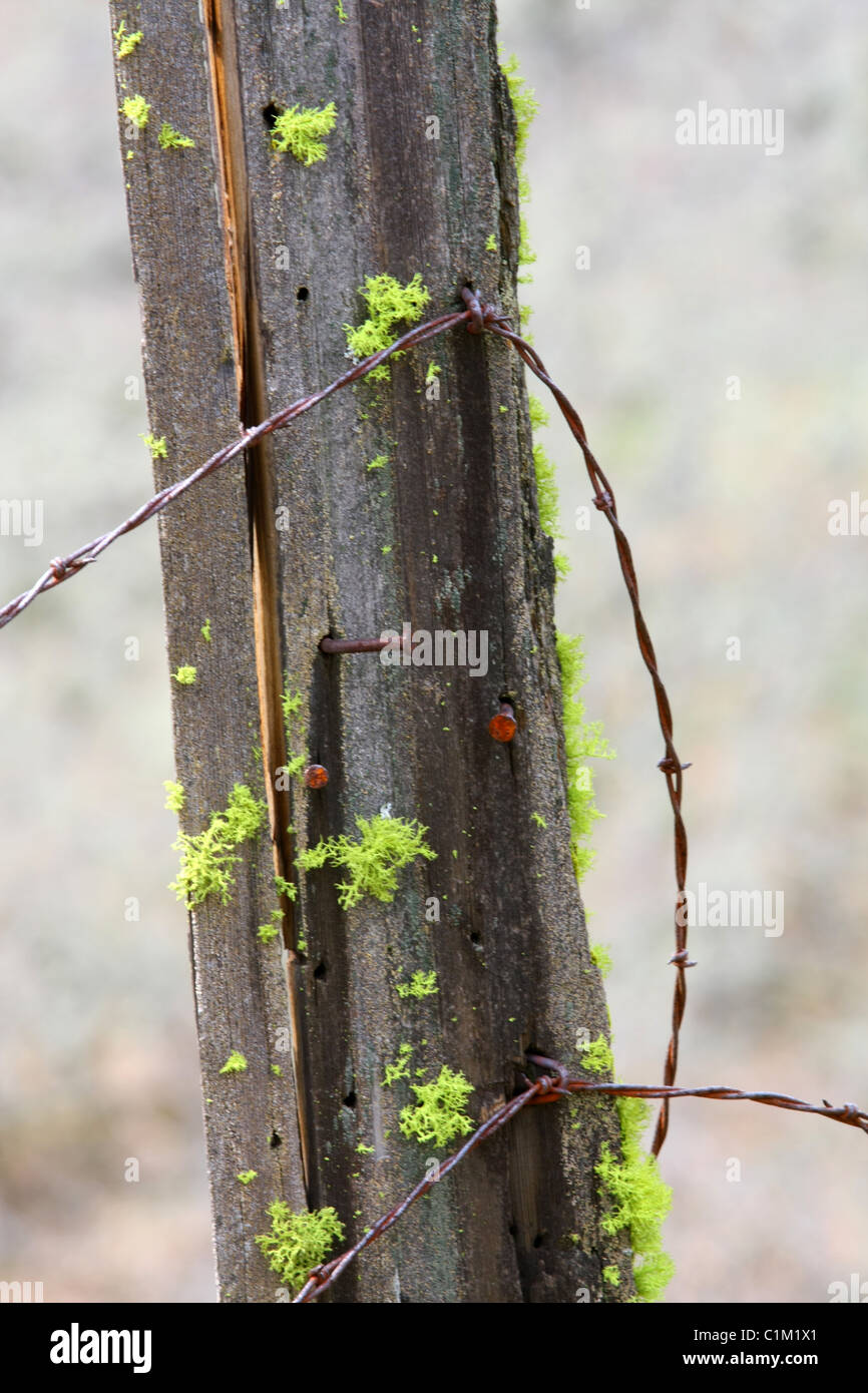 40,251.07219 close up of an old and weathered wooden fence post, draped with rusty barbed wire, leaning sideways - Stock Image