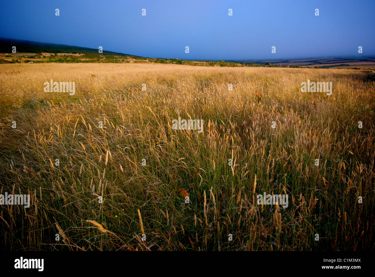 Hayfield in the evening sun. - Stock Image