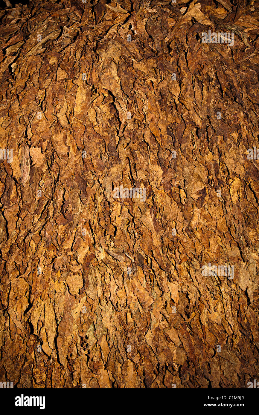 Tobacco leaves drying Andorra - Stock Image