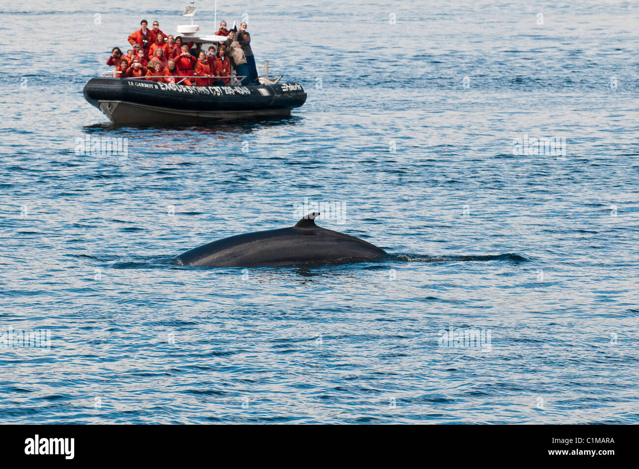 Whale watching near Tadoussac, Quebec, Canada. - Stock Image