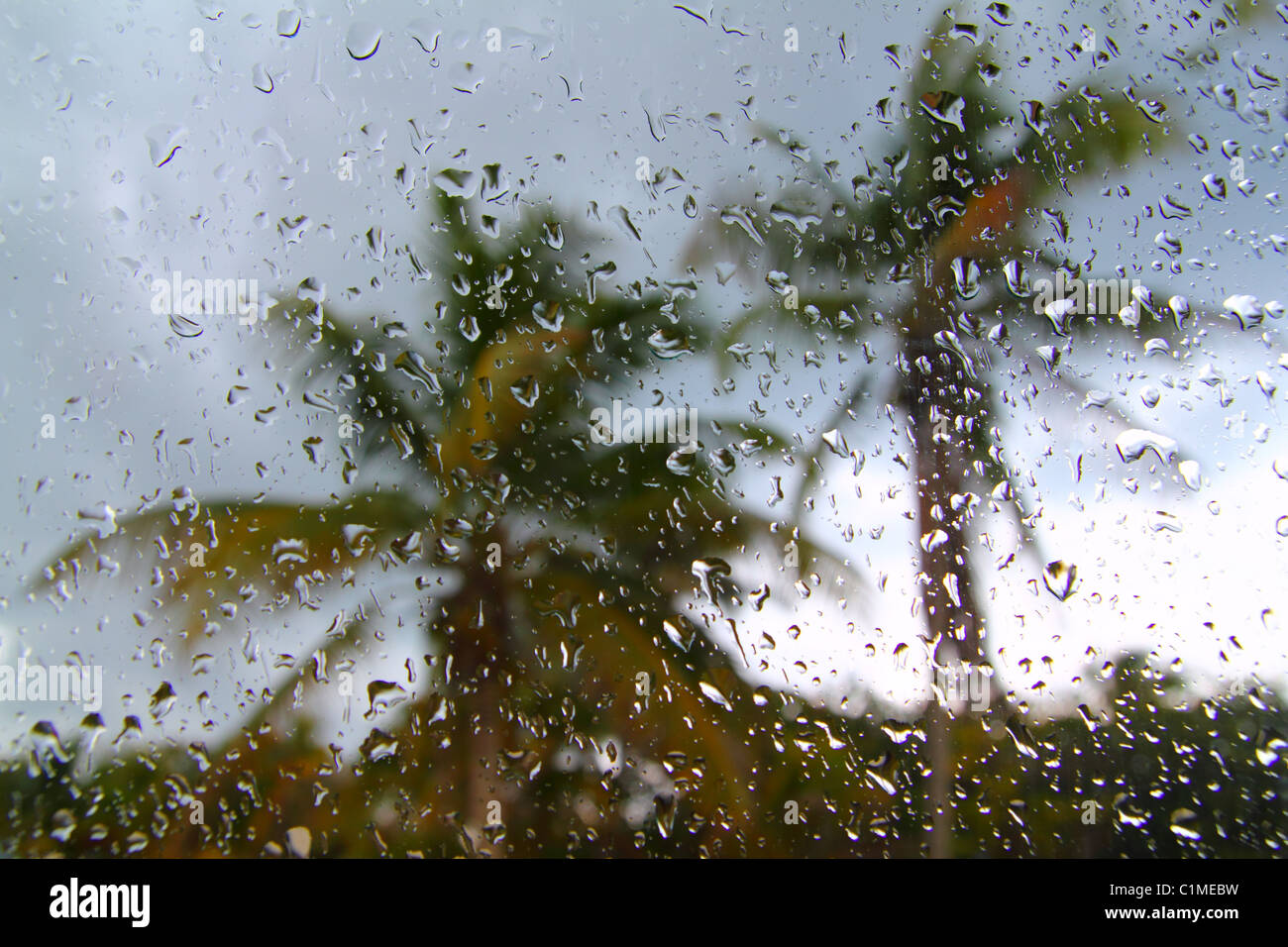 Hurricane tropical storm palm trees from car inside window glass water drops - Stock Image