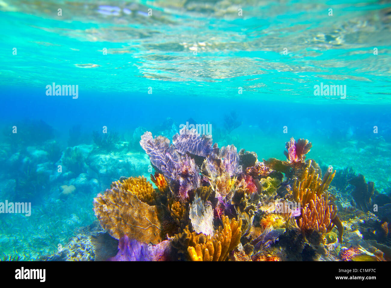 Mayan Riviera reef snorkel underwater coral colorful paradise - Stock Image