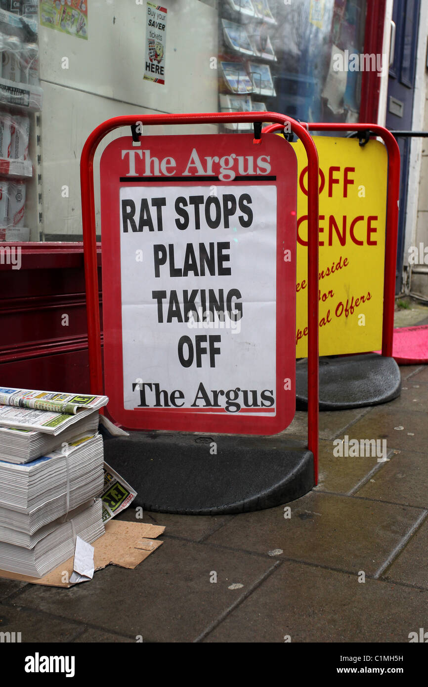Brighton argus headlines for dating