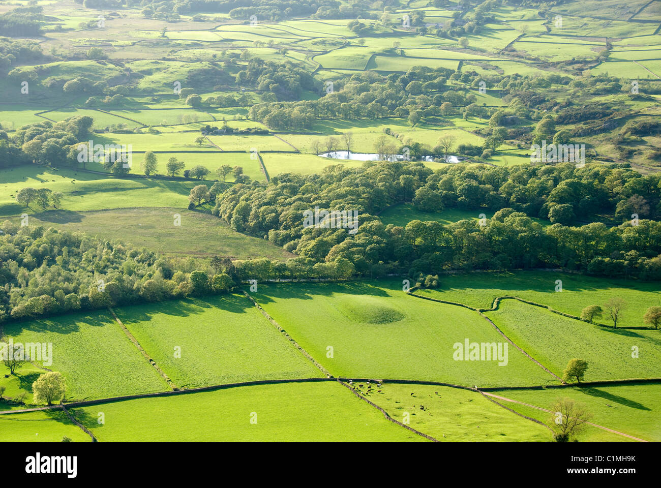 Pastures and woodland from above, Wasdale Valley, Lake District National Park, Cumbria, England, UK - Stock Image