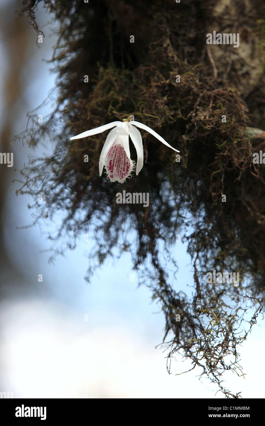 Прическа боб удлиненное лицо фото