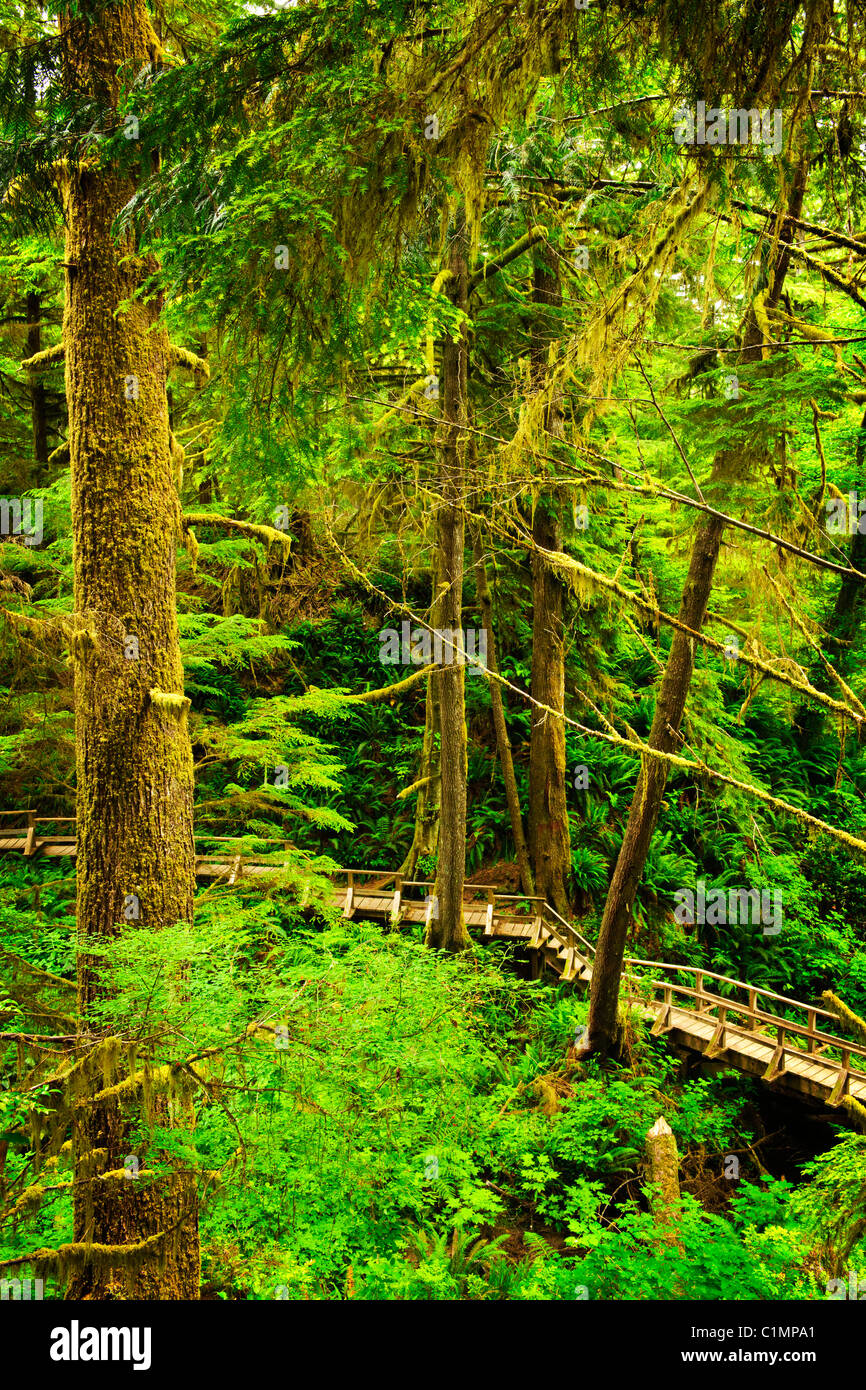 Wooden path through temperate rain forest. Pacific Rim National Park, British Columbia Canada - Stock Image