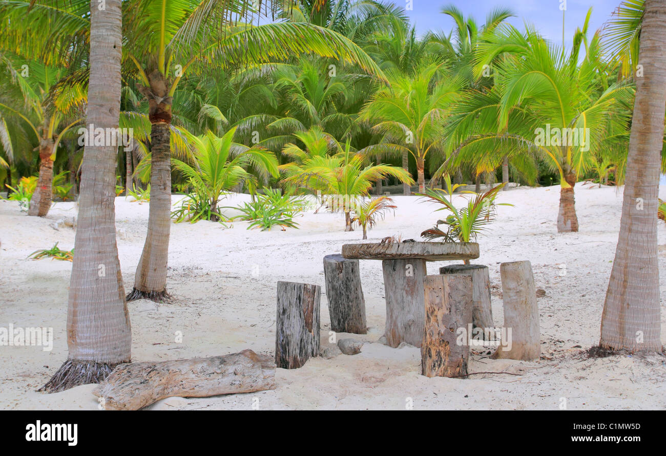 coconut Tulum palm trees beach with table and seats trunk made - Stock Image
