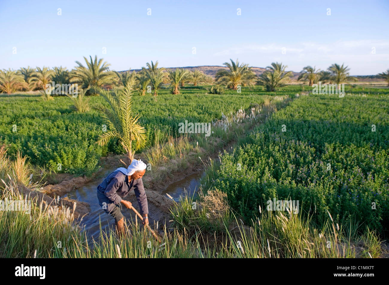 Features of irrigational agriculture in ancient Egypt 45