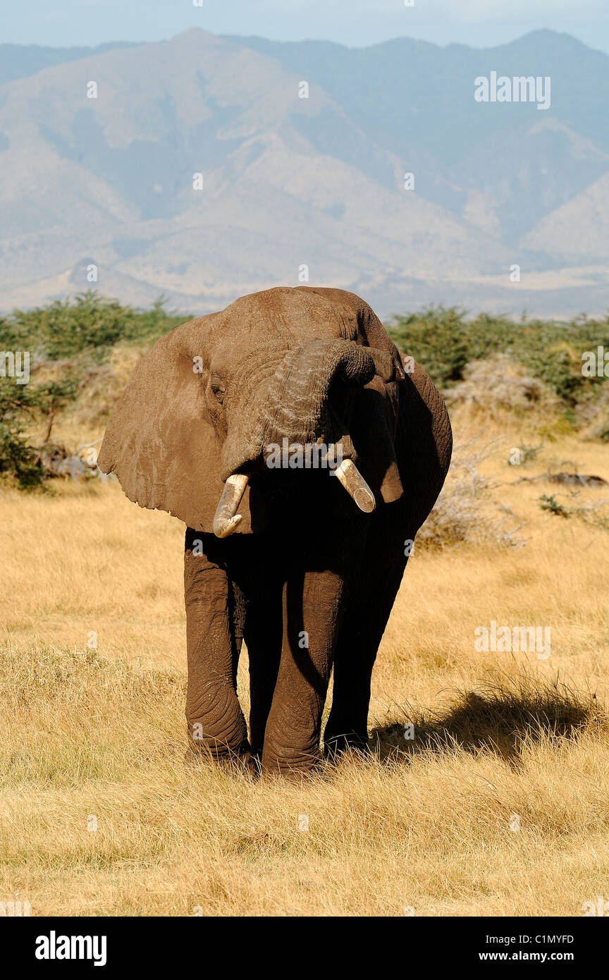 Tanzania, Rift valley, lake Manyara national park - Stock Image