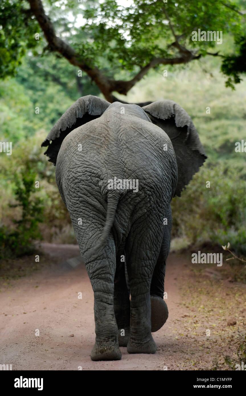 Tanzania, Rift valley, lake Manyara national park Stock Photo
